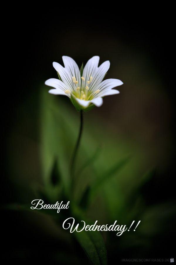flores con frases (849)