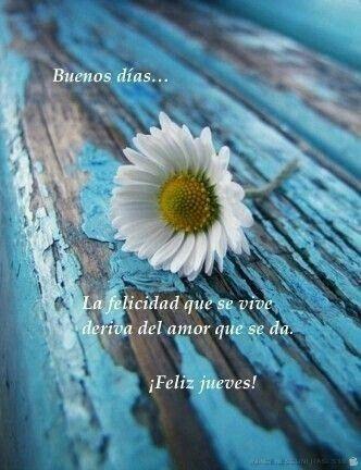 flores con frases (796)
