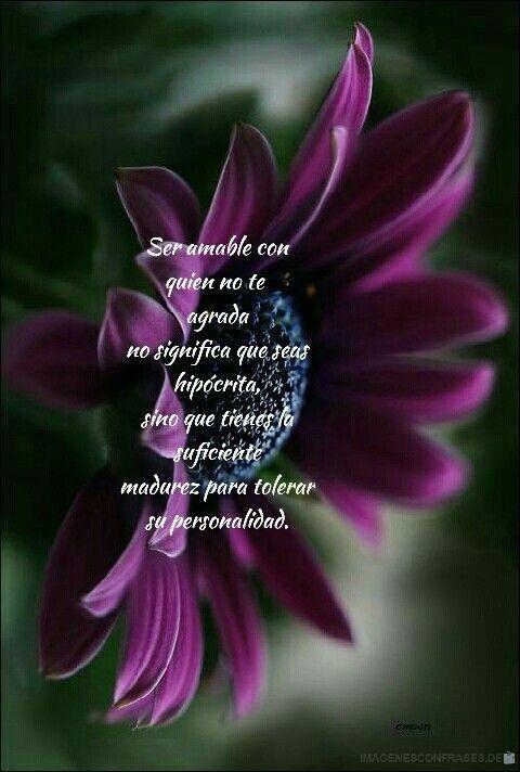 flores con frases (720)